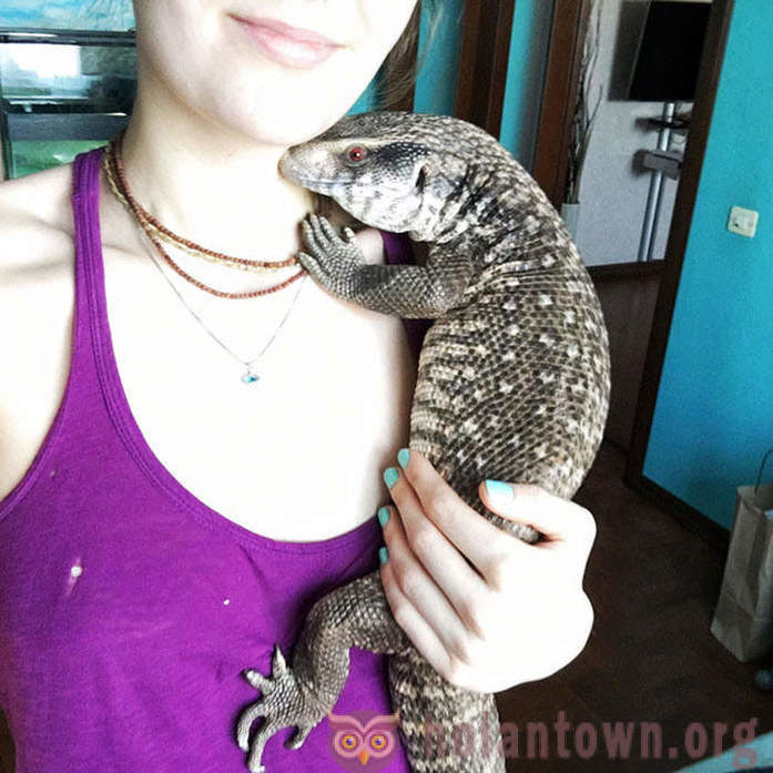 Sang-froid, mais aimant animal de compagnie: Savannah Monitor - un animal de compagnie